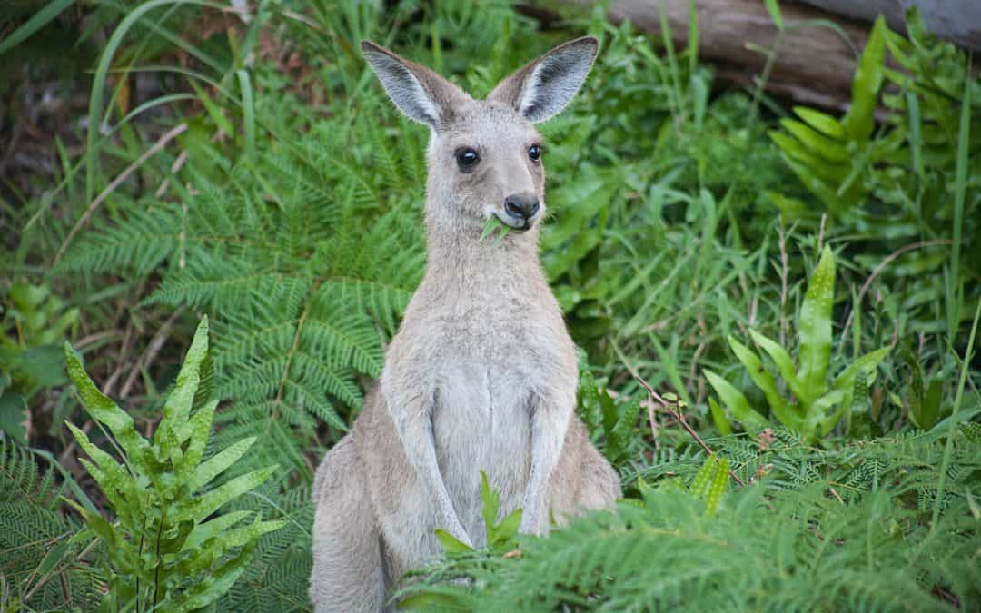 Parks and Leisure Australia Webinar